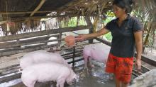 Loan Illustration